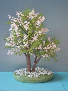 дерево невеста черемуха