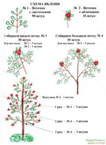 схема яблоневого деревца